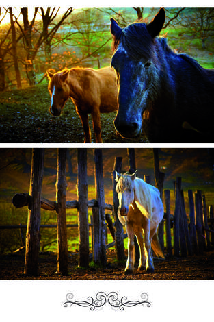 Лошади на рассвете